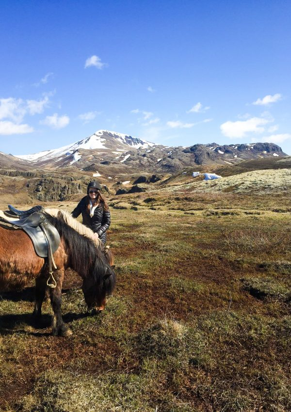 4 Days in Iceland - Horseback Riding